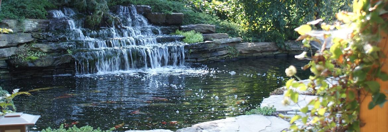 Beautiful & Relaxing Koi Ponds